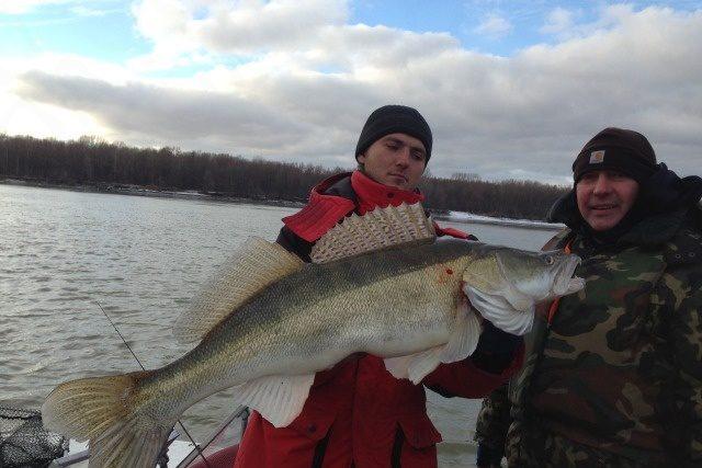 Два рыбака с гигантским судаком