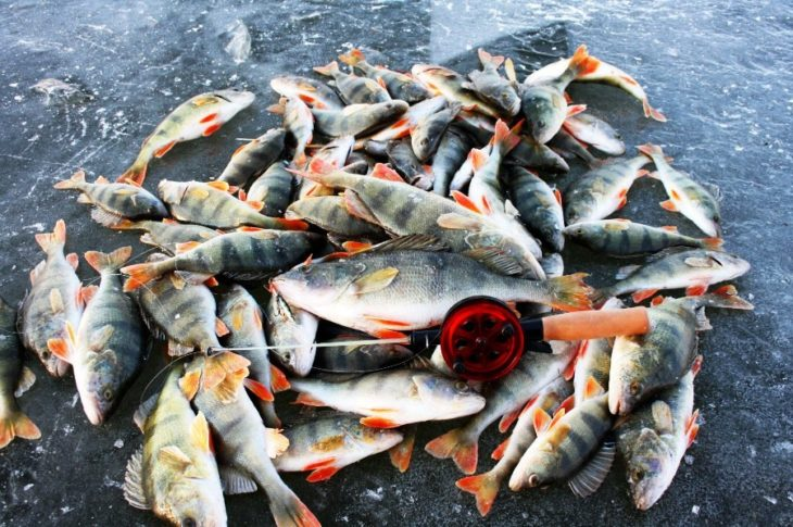 снасти для рыбалки в астрахани в августе