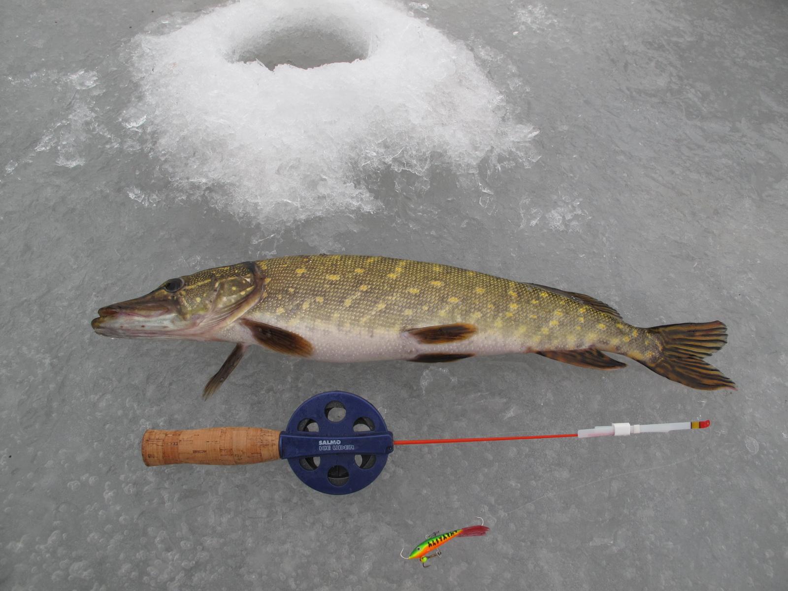 Рыба лежащая на льду и зимняя удочка