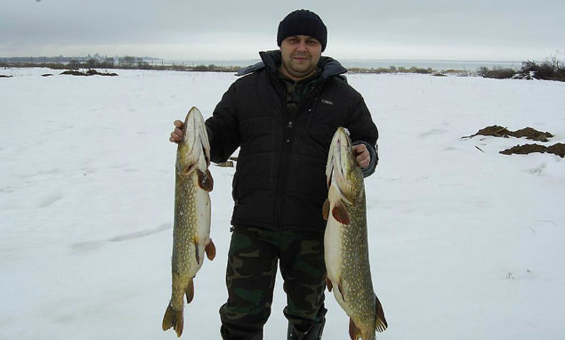 Рыбак с огромными щуками в руках