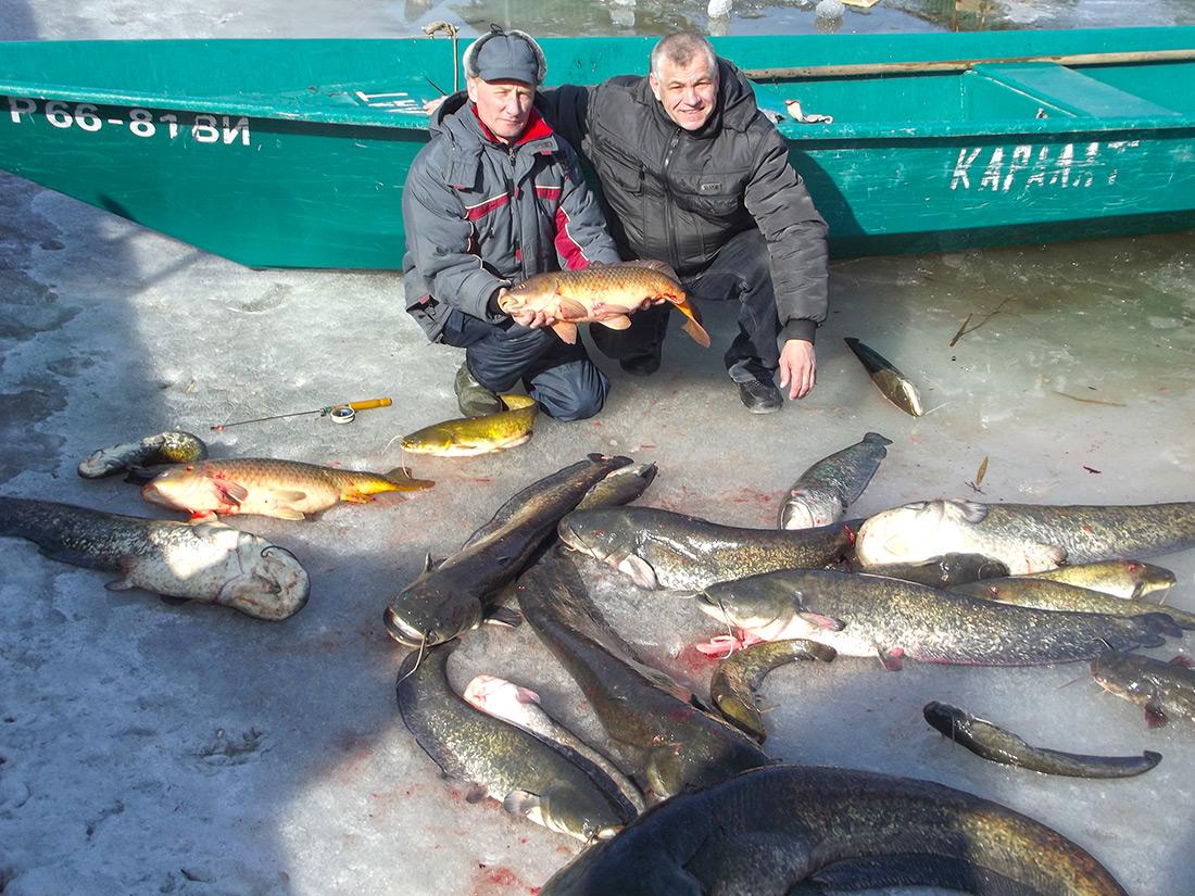 Два друга рыбака с огромной кучей сомов