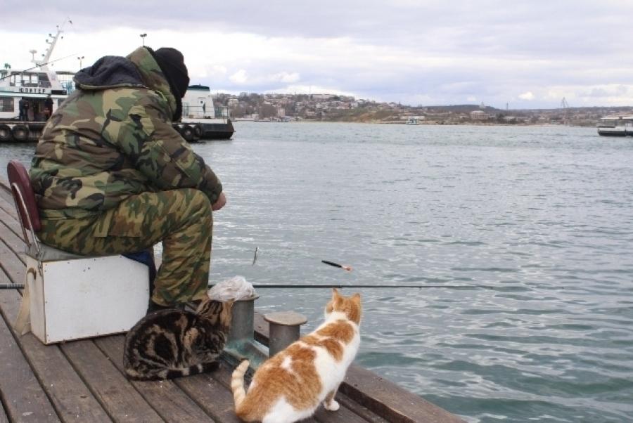 Рыбак с удочкой и два усатых помощника