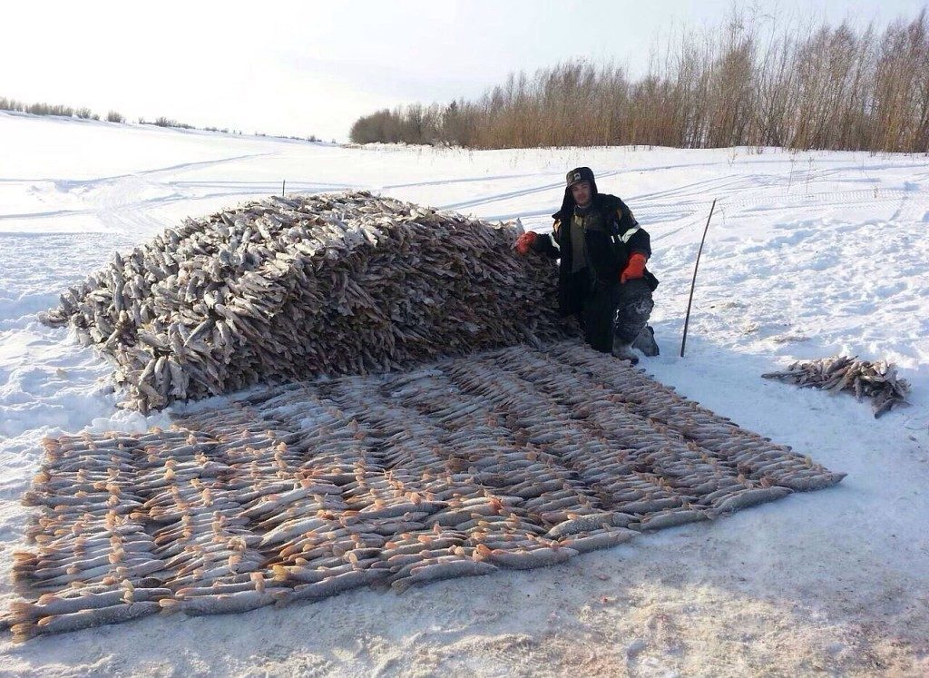 Огромная куча рыбы