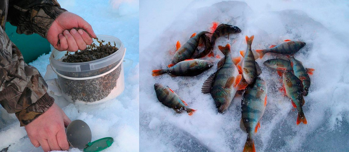 Рыбак забивает кормушку для поимки окуня