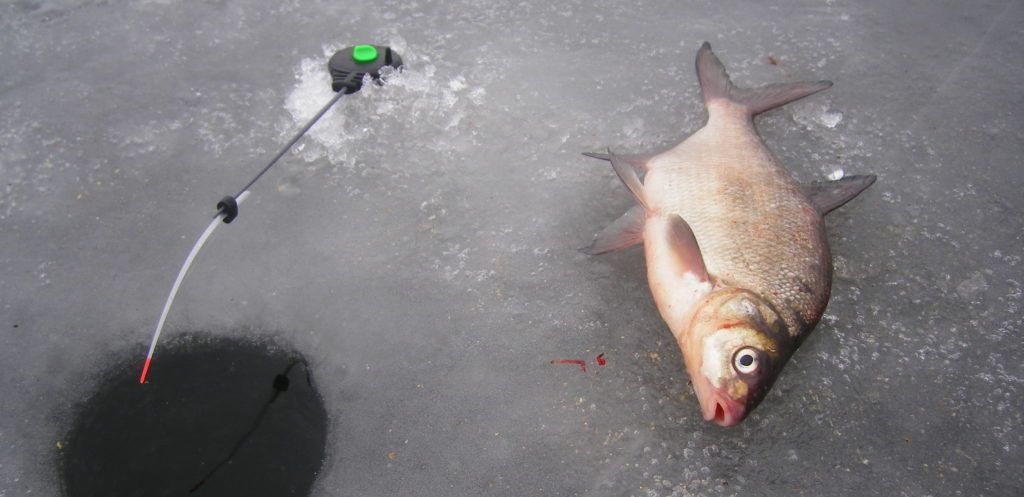 Пойманная рыба на льду