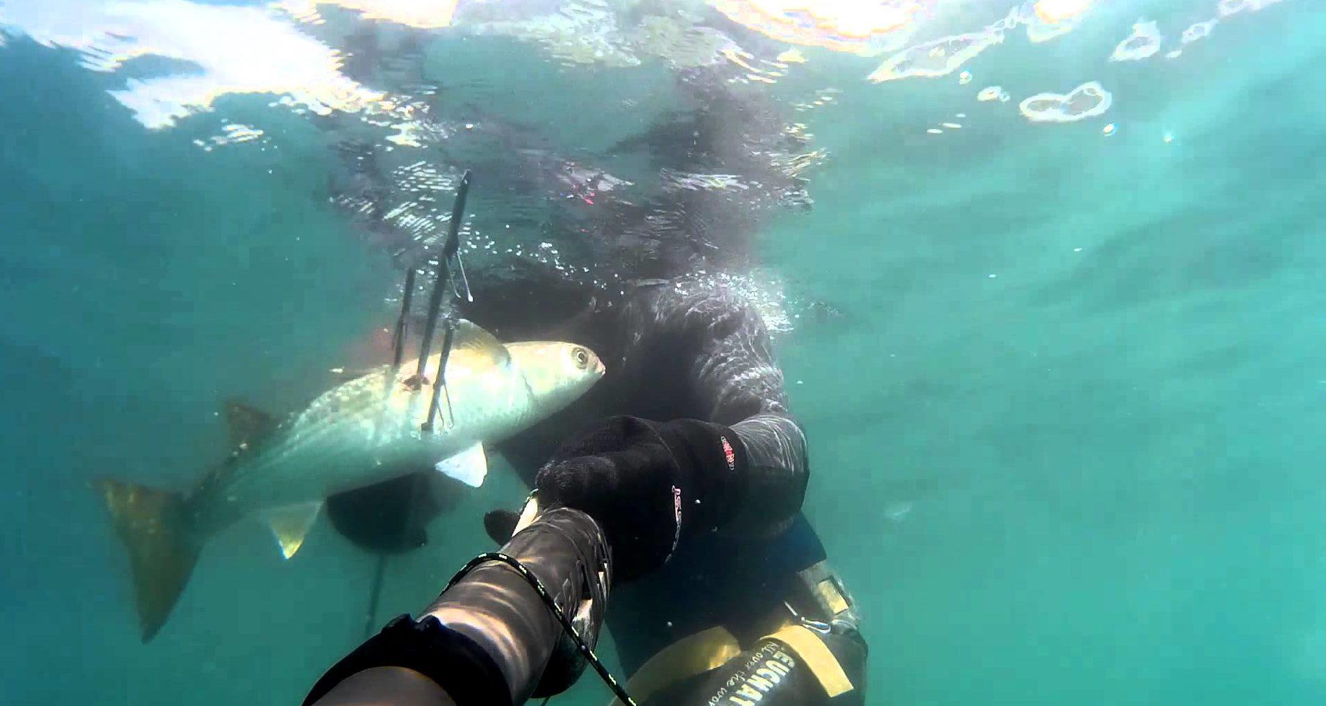 Подводный охотник с рыбой на гарпуне