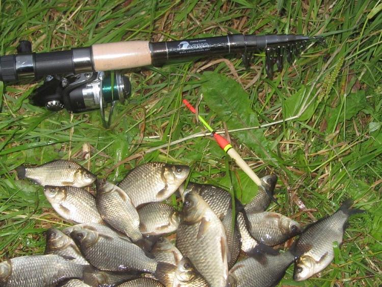 Удочка и куча пойманной рыбы