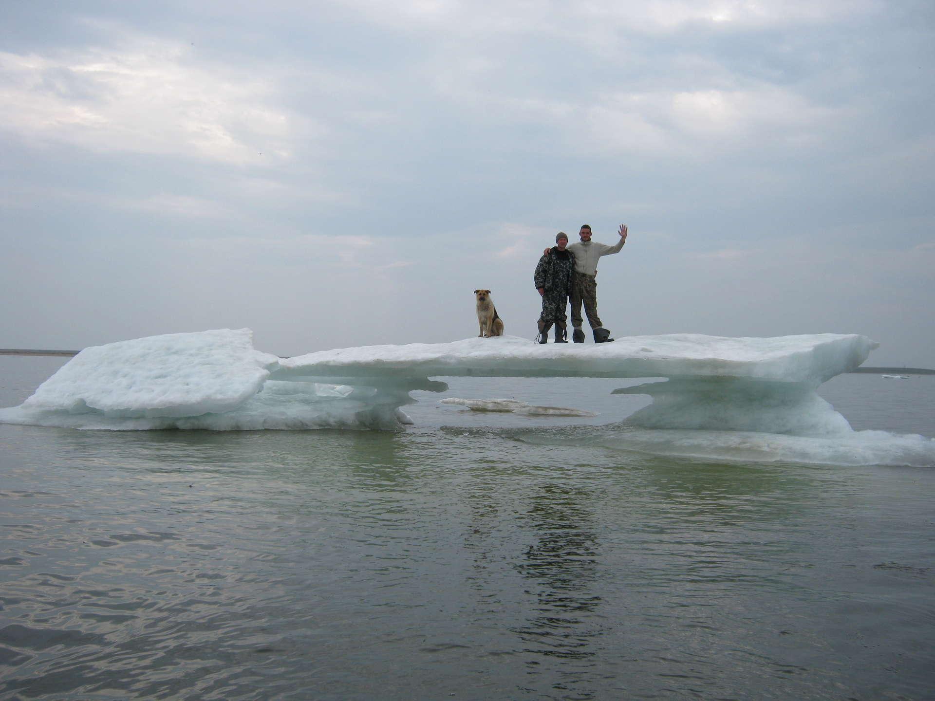 Два рыбака и собака на льдине