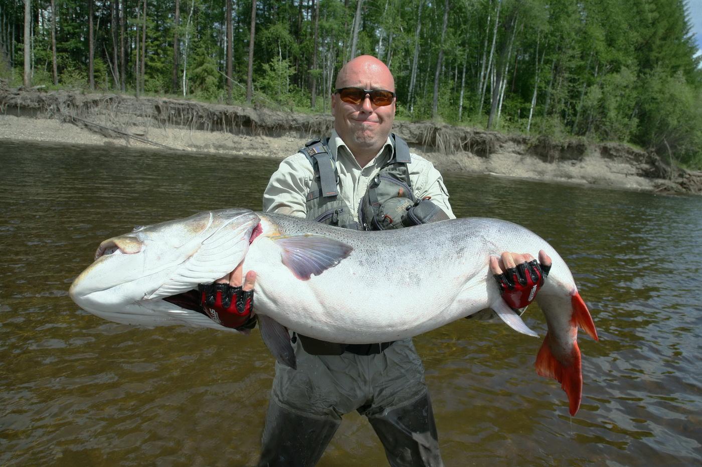 Лысый мужик с огромной трофейной рыбой