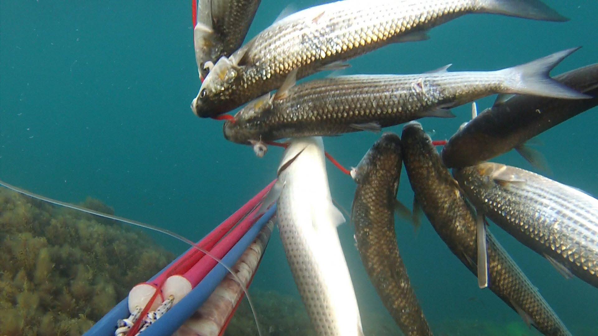 Полный кукан рыбы
