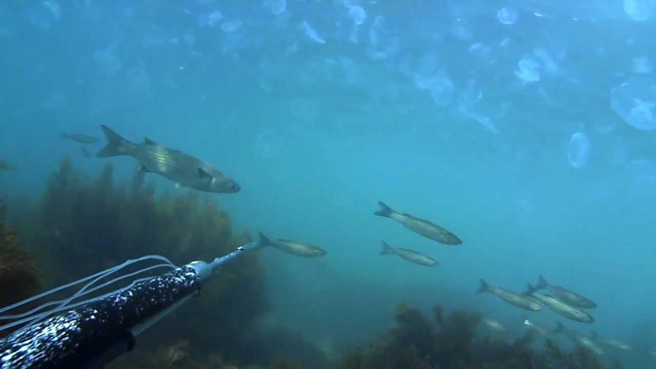 Стая рыбы