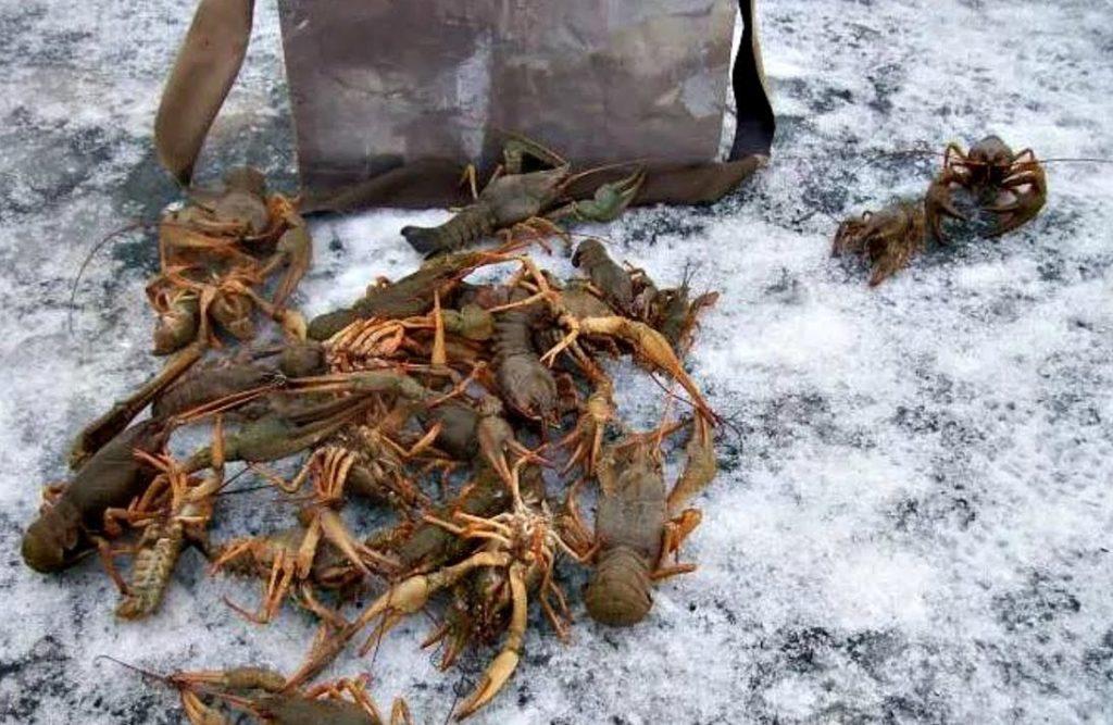 Можно ли ловить раков раколовками в ростовской области