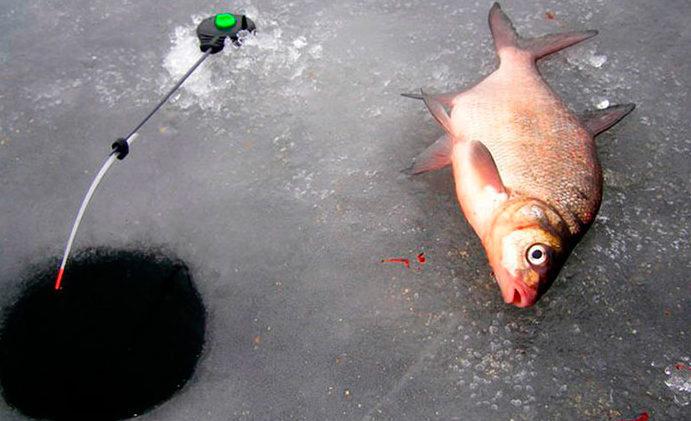 Пойманный лещ на льду