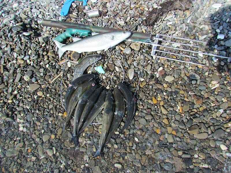 Ружье с  пятизубам и добытая рыба