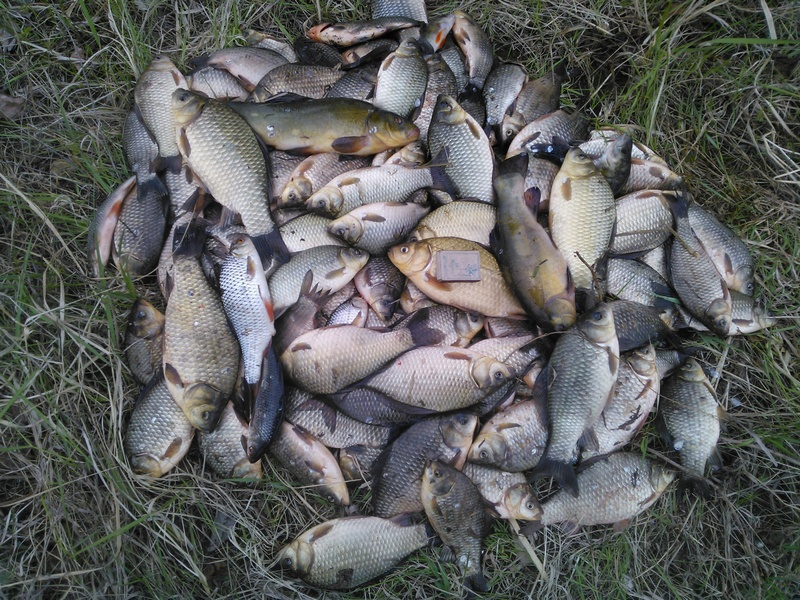 Куча рыбы