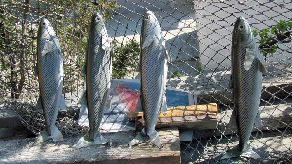 Четыре рыбки приманки на кефаль