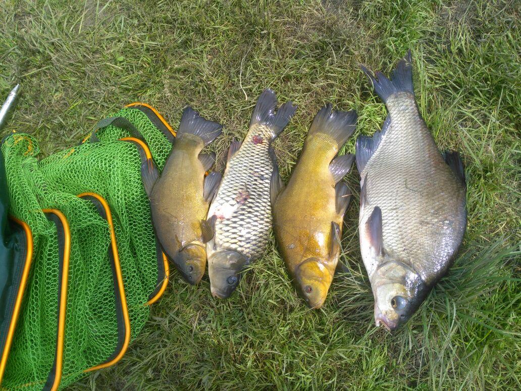 Пойманная рыба на зеленой траве
