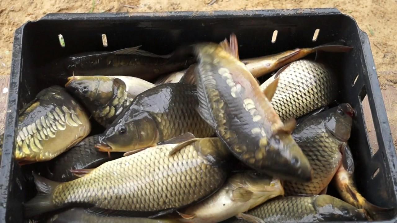 Полный ящик рыбы
