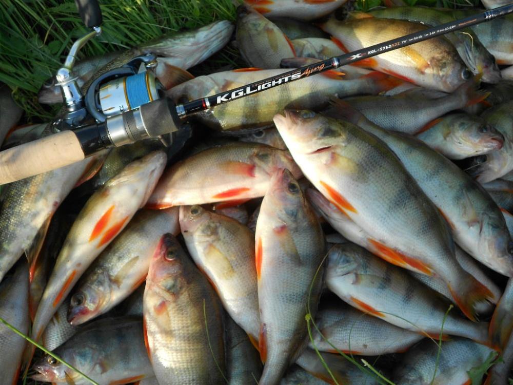 Куча пойманной рыбы