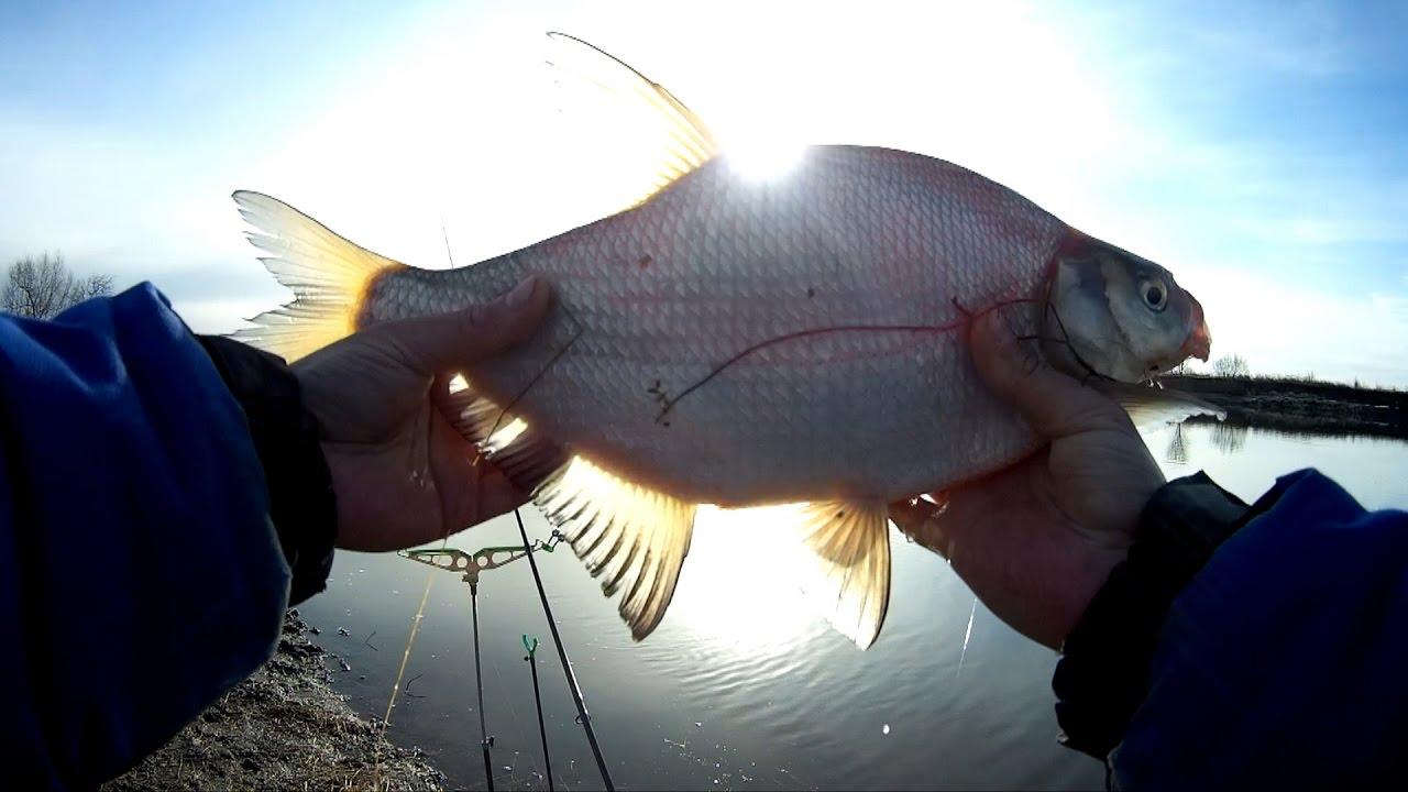 К тому же, стоимость такой снасти невелика, а значит, ловля леща на фидер на реке вполне доступна не только профессиональным рыболовам, но даже новичкам-любителям.