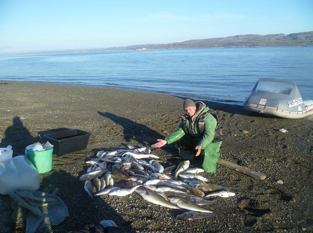Рыбак на пляжу с уловом трески