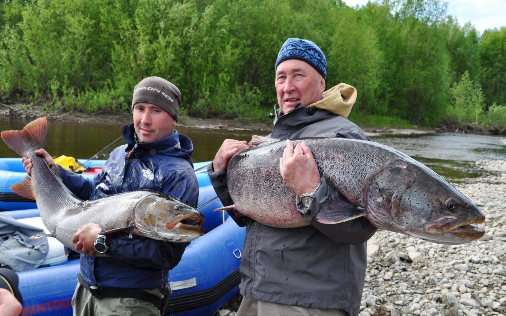 Два рыбака с огромными рыбами