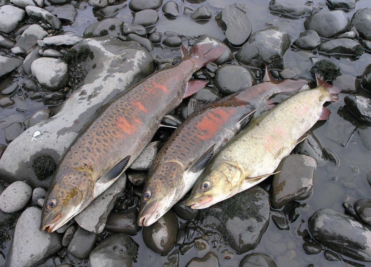 Пойманная рыбка на камнях