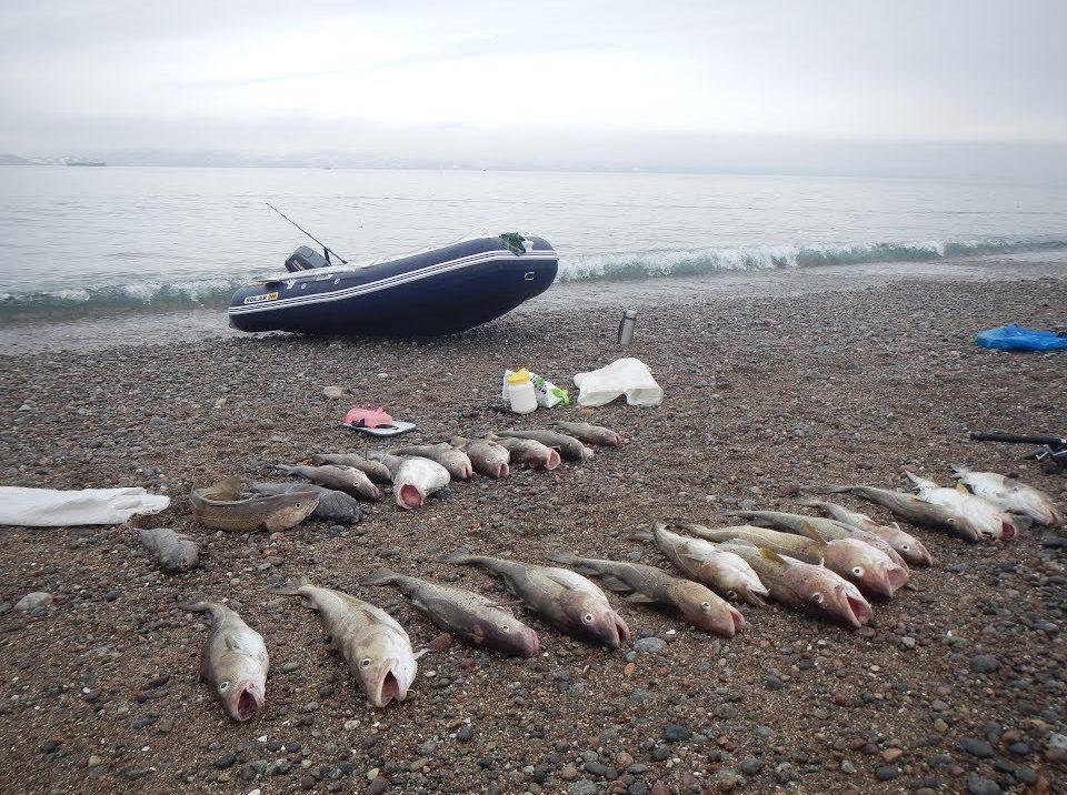 Пойманная рыба на берегу моря