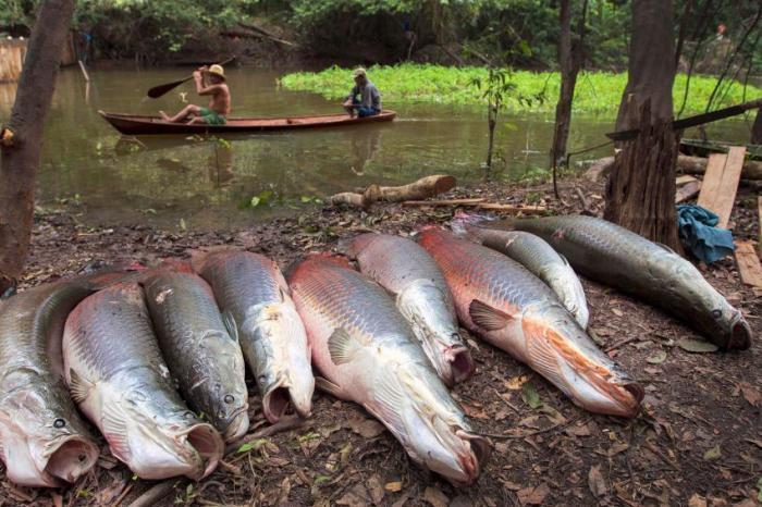 Пойманная рыба на берегу реки