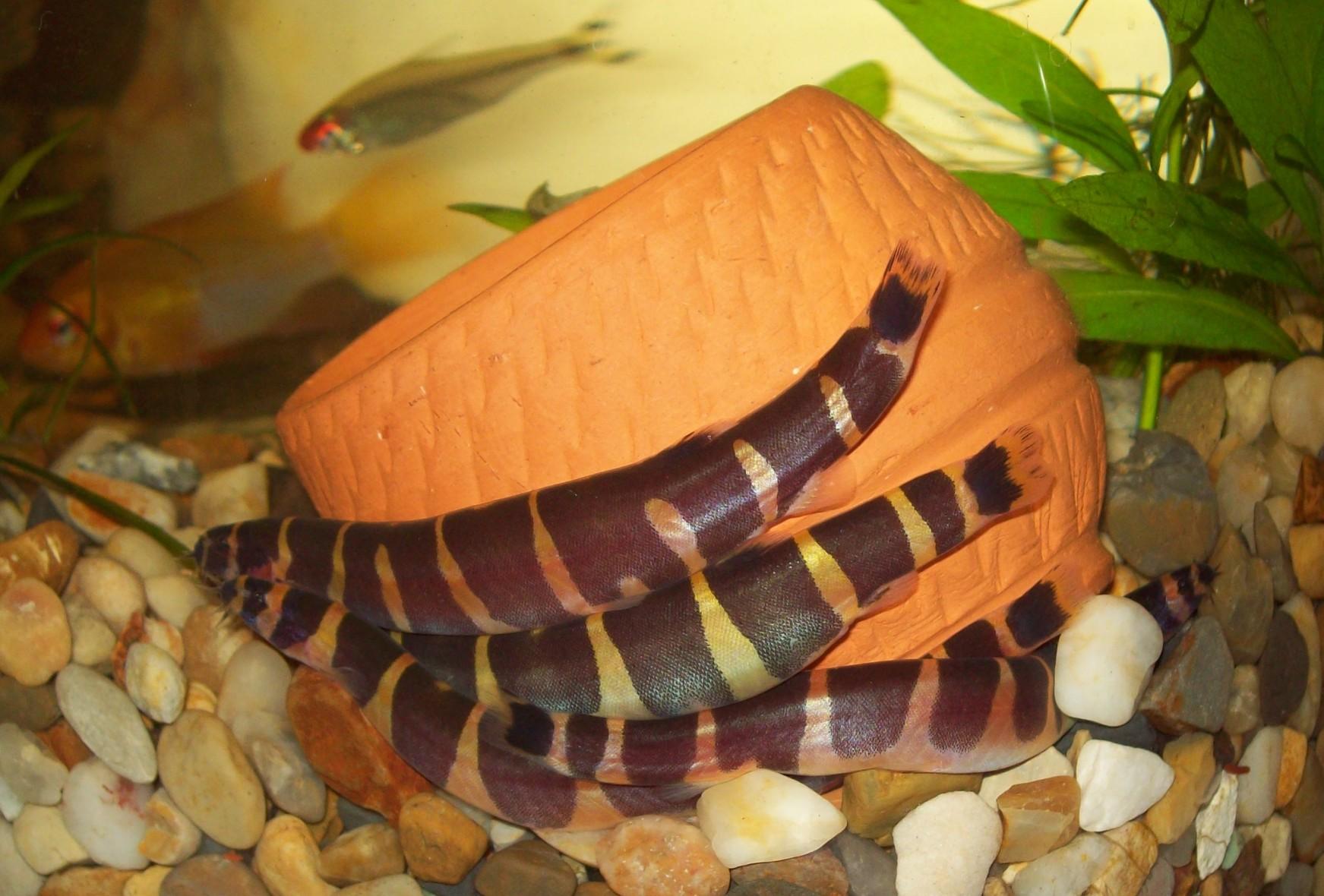 Рыбки на дне аквариума