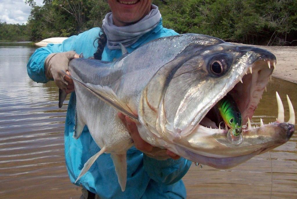 Клыкастая рыба