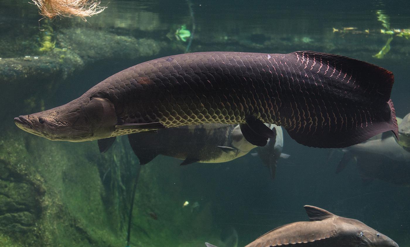 Рыба во всей своей красе