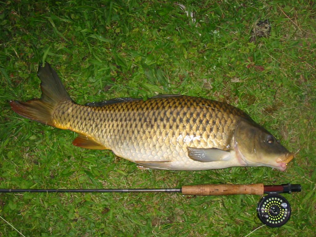 Пойманная рыба на берегу