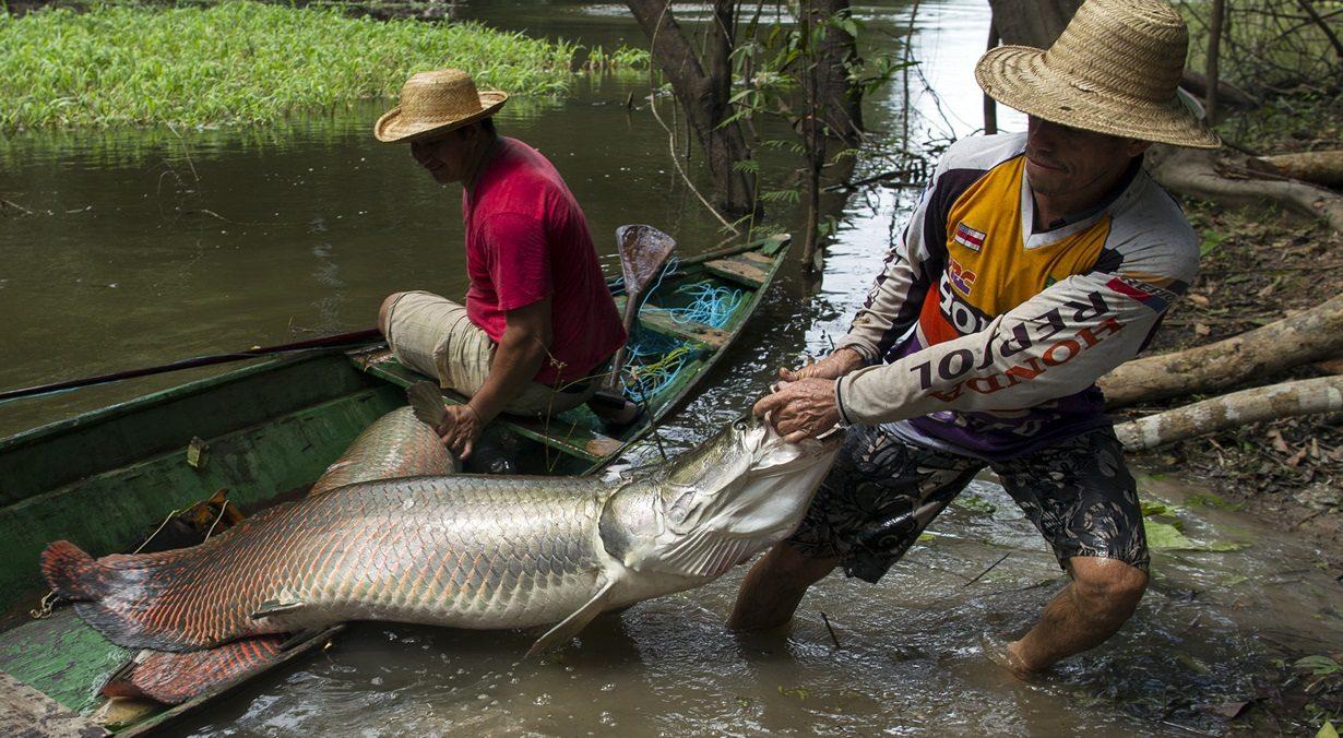 Рыбаки тащат крупную рыбу