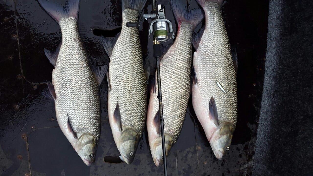 Четыре пойманные рыбы