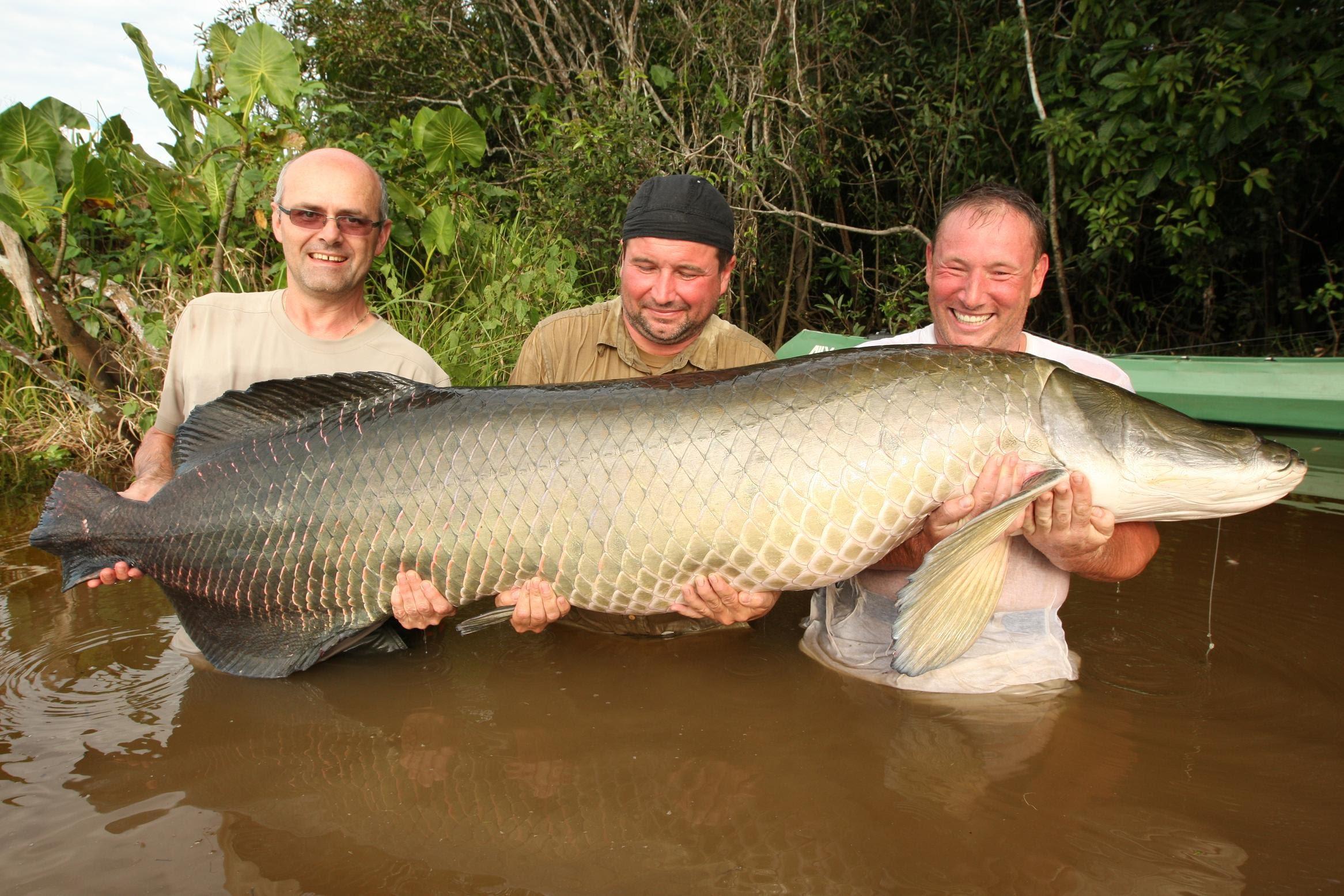 Три довольных рыбака с пойманной рыбай
