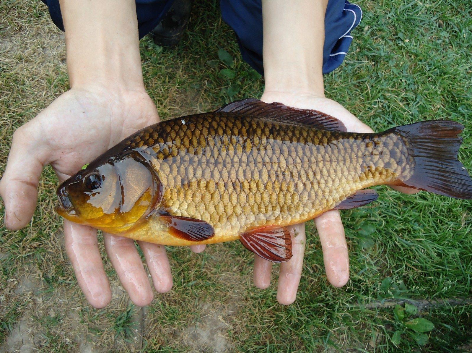 Пойманная рыба в руках
