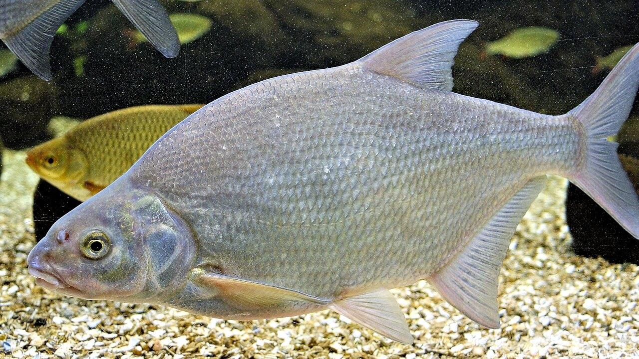 Рыба на дне водоема