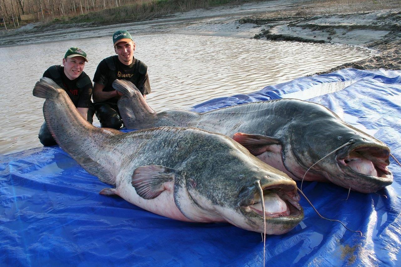 Два рыбака с зачетными трофеями