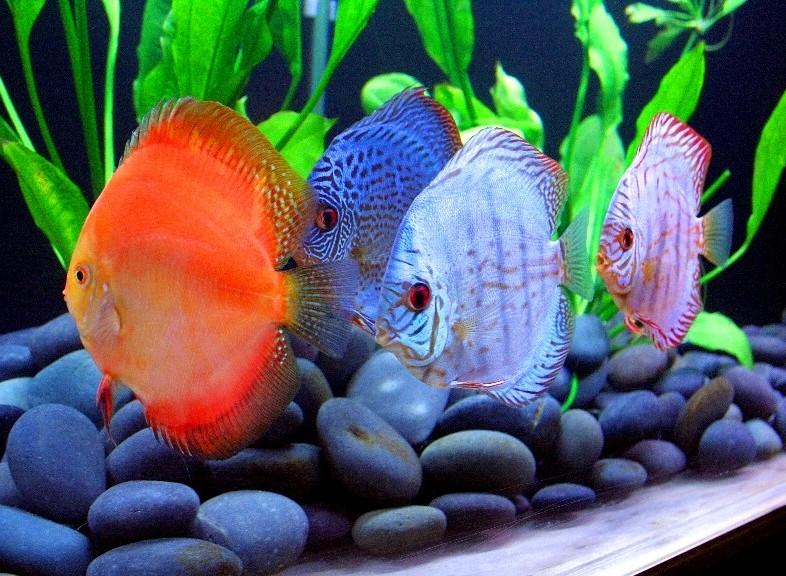 Четыре рыбки