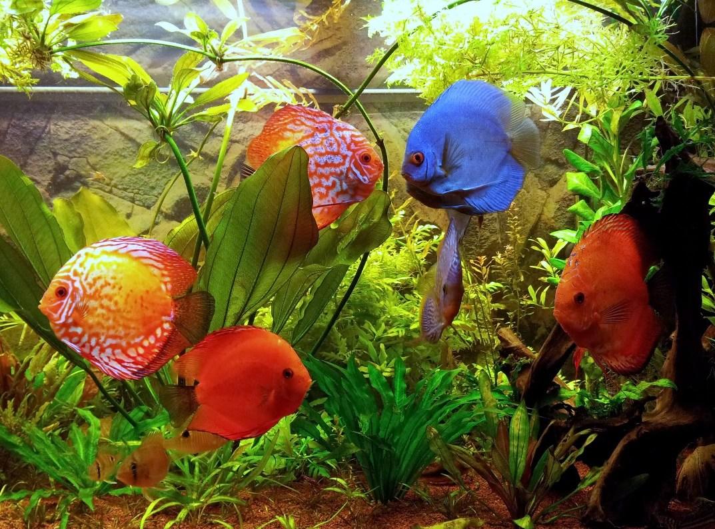 Полный аквариум красивых рыб