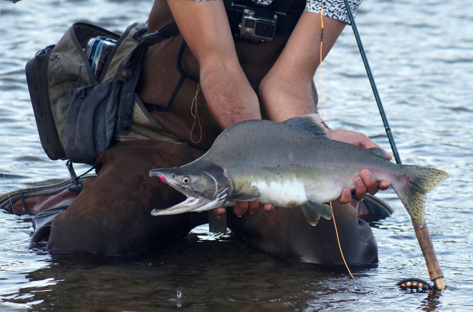 Рыба с открытой пастью