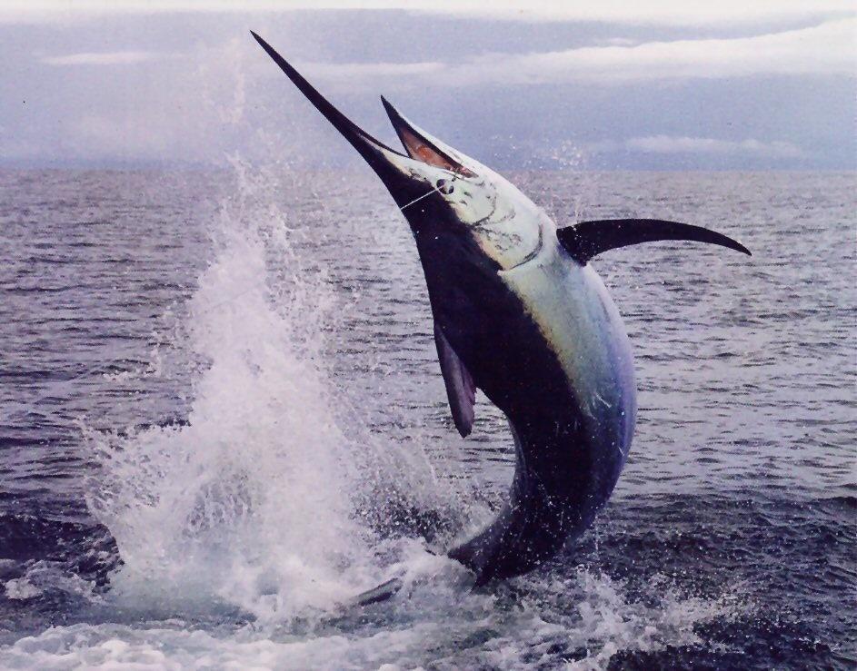 Огромная рыба выпрыгнула из воды