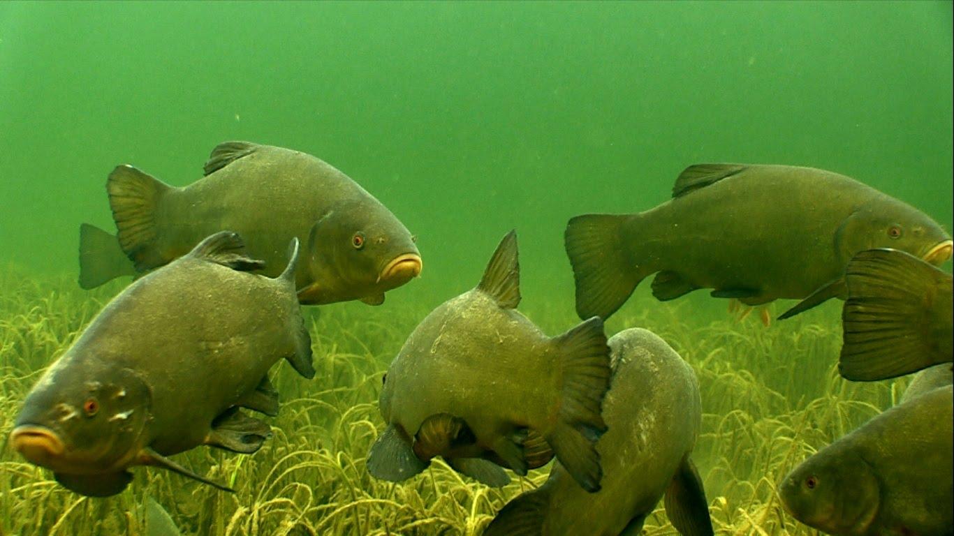 Косяк рыб на дне водоема