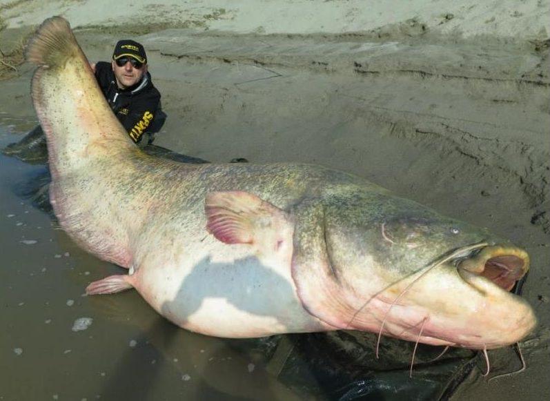 Рыбак с гигантской рыбой