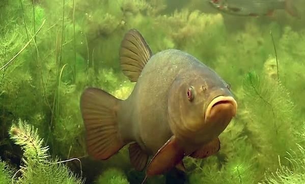 Рыба на дне озера