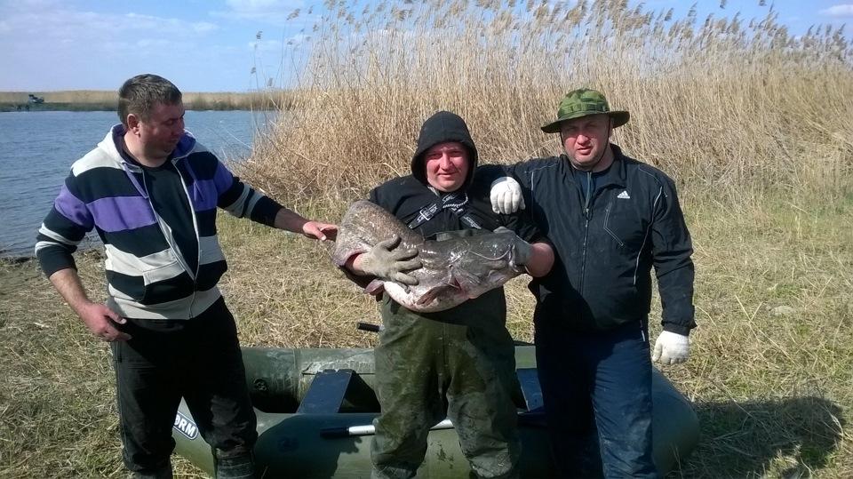 Три рыбака с пойманым сомом
