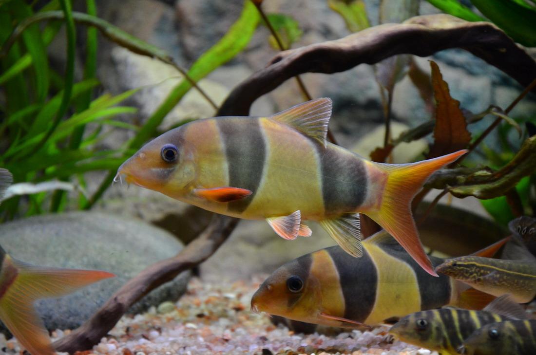 Стая рыбок
