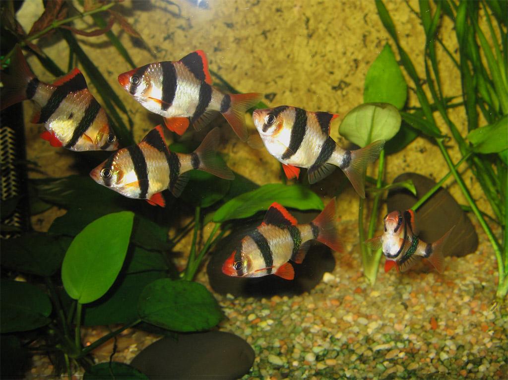 Косяк рыбок