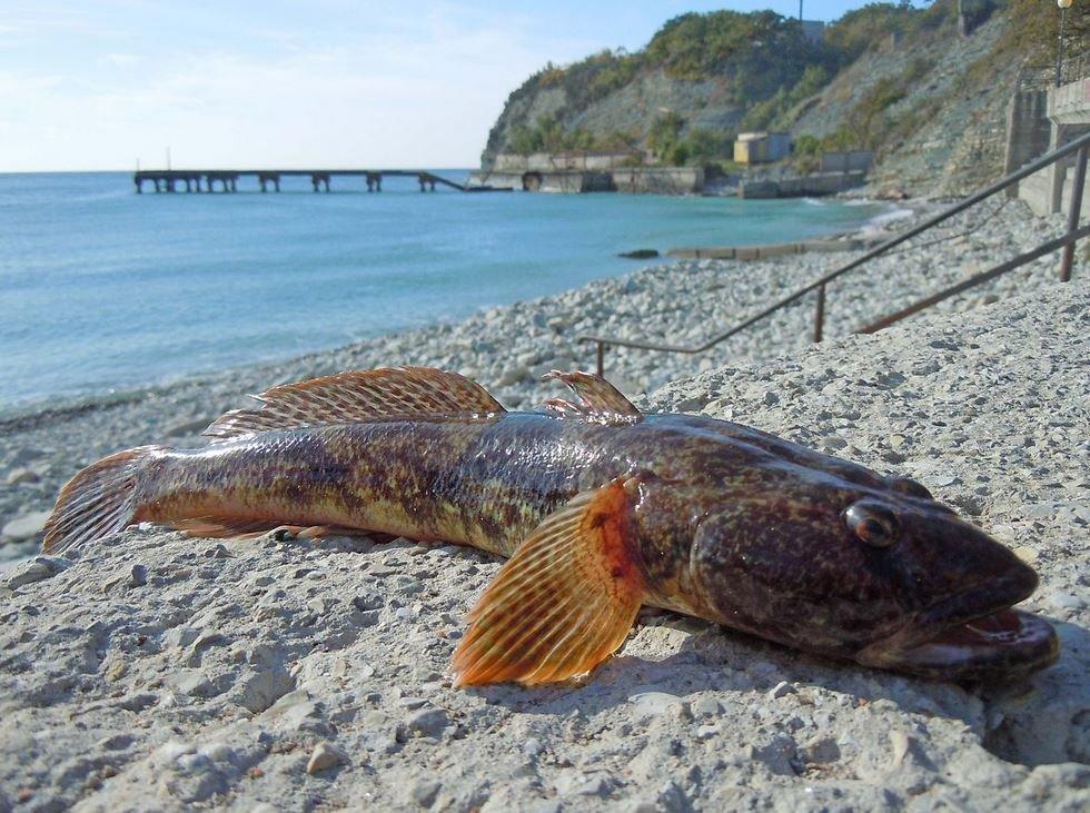 Рыба на берегу моря